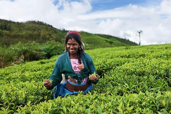 individuele reis Sri Lanka