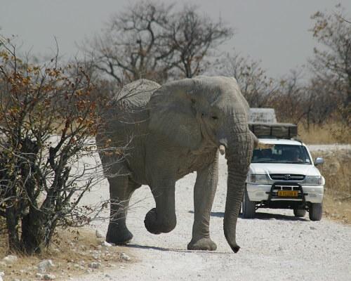 De hoogtepunten van Namibie