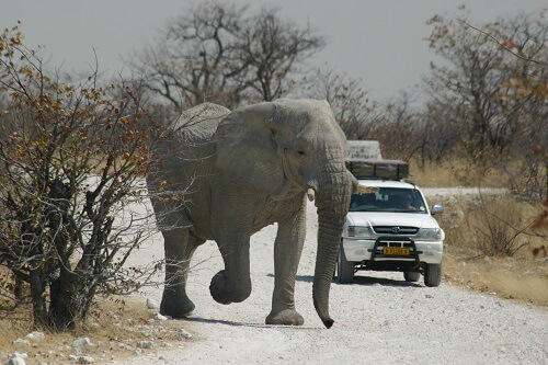 Self-drive - De hoogtepunten van Namibie